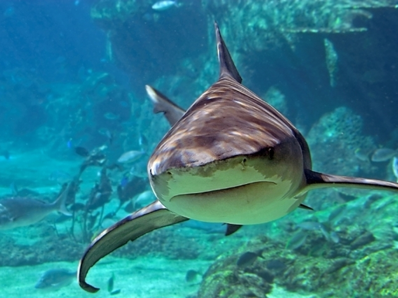 Potápění se žraloky Zahraničí